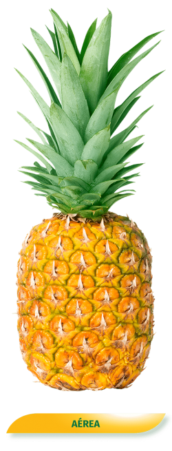 Piña Aerea